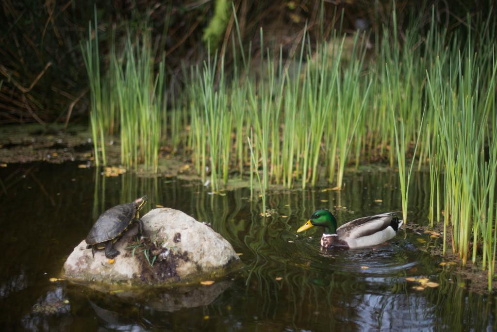 Santa Barbara Botanic Garden Wildlife